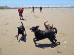 Galtee, Karma & Shuki play after their salt water therapy at the beach.